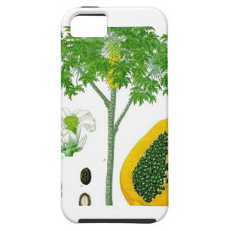 Papaya iPhone 5 Carcasa