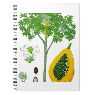 Papaya Libro De Apuntes Con Espiral