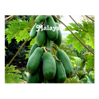 Papaya Postcard
