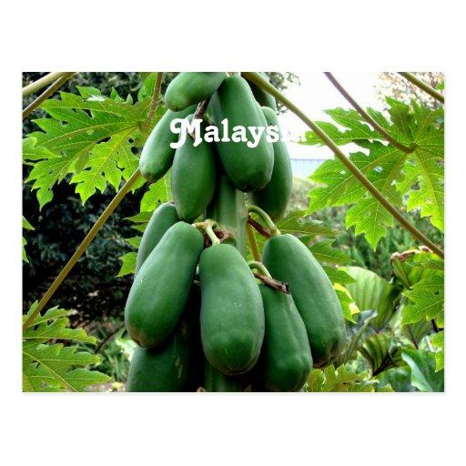 Papaya paper coupons