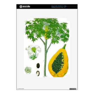 Papaya iPad 2 Skin