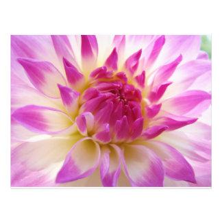 Papel blanco púrpura rosado del aviador de la flor tarjetas publicitarias
