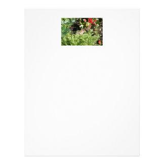papel con membrete con la foto del chipmunk lindo plantilla de membrete