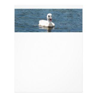 Papel con membrete con la foto del cisne lindo, membrete personalizado
