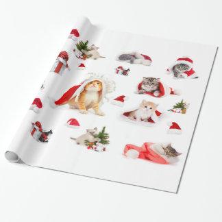 Papel de embalaje adorable de los gatitos del