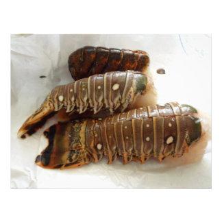 Papel de Scrapbooking de las colas de langosta Membrete