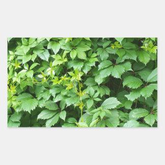 Papel pintado de las hojas de uvas pegatina rectangular