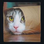 """Paper cat - funny cats - cat meme - crazy cat bandana<br><div class=""""desc"""">pet , cat , &quot;cat funny&quot; , &quot;funny cat memes&quot; , &quot;cat crazy &quot;, &quot;cute cat memes &quot;, &quot;cat memes funny&quot; , &quot;kitty memes&quot; , &quot;pet memes&quot; , &quot;pet cat&quot;</div>"""