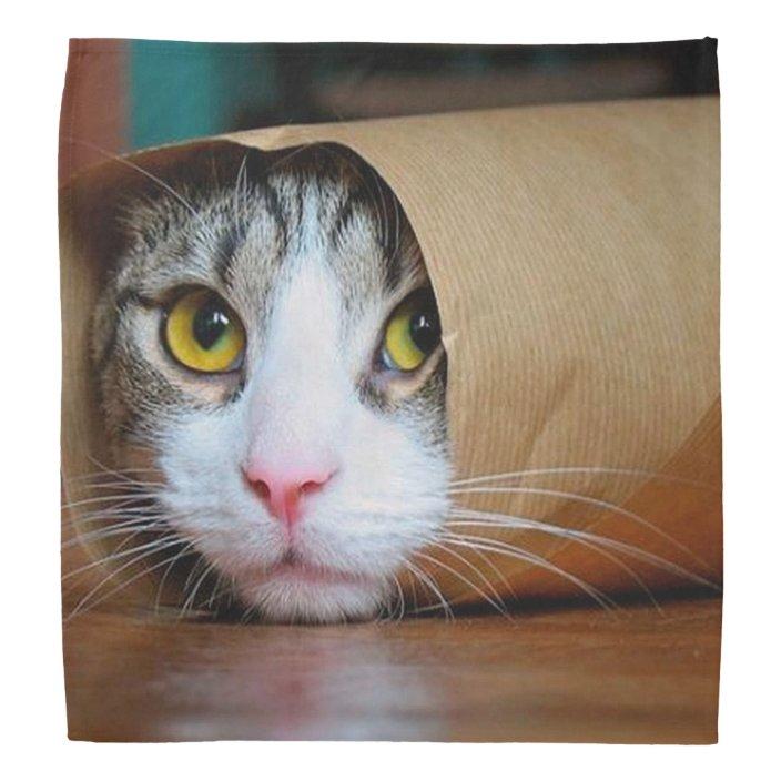 Paper Cat Funny Cats Cat Meme Crazy Cat Bandana Zazzle Com