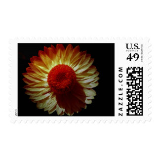 Paper Daisy Postage