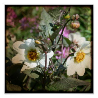paper flowers - 8x8 TTV art photographic print