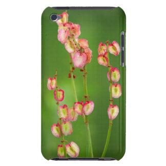 Paper Hearts (Rumex Woodii), Ukhahlamba iPod Touch Case