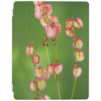 Paper Hearts (Rumex Woodii), Ukhahlamba iPad Smart Cover