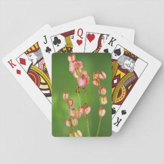Paper Hearts (Rumex Woodii), Ukhahlamba Card Deck