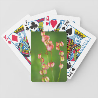 Paper Hearts (Rumex Woodii), Ukhahlamba Playing Cards