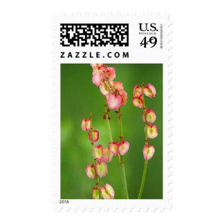 Paper Hearts (Rumex Woodii), Ukhahlamba Stamp