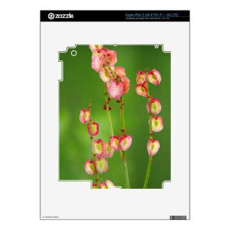 Paper Hearts (Rumex Woodii), Ukhahlamba iPad 3 Decal