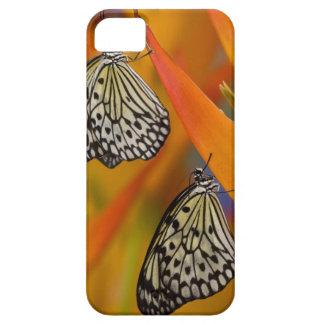 Paper Kite Butterflies (Idea leuconoe) on flower iPhone SE/5/5s Case
