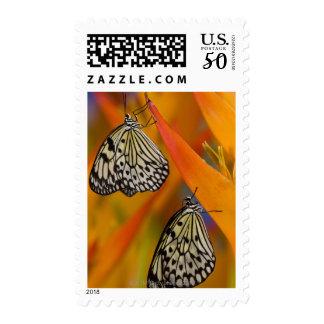 Paper Kite Butterflies (Idea leuconoe) on flower Postage