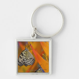 Paper Kite Butterflies (Idea leuconoe) on flower Silver-Colored Square Keychain