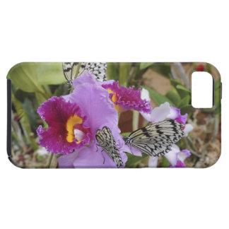 Paper Kite Butterflies (Idea leuconoe) on iPhone SE/5/5s Case