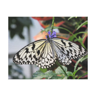 Paper Kite Butterfly Stretched Canvas Prints