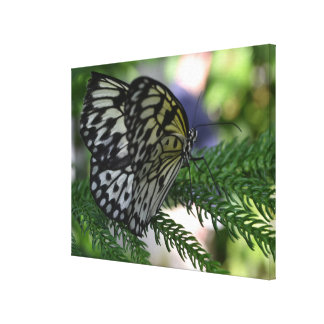 Paper Kite Butterfly Canvas Wrap Canvas Print