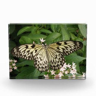 Paper Kite Butterfly Decorative Acrylic Award