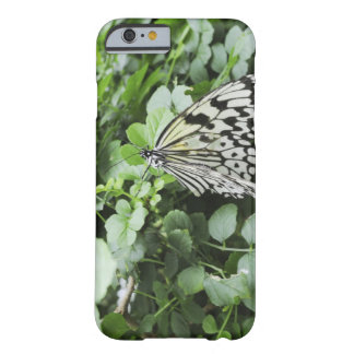 Paper Kite Butterfly (Idea leuconoe) on vine, Barely There iPhone 6 Case