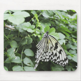 Paper Kite Butterfly (Idea leuconoe) on vine, Mouse Pad