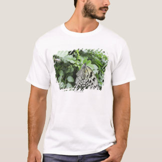 Paper Kite Butterfly (Idea leuconoe) on vine, T-Shirt