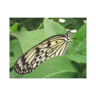 Paper Kite Butterfly Macro Canvas Print