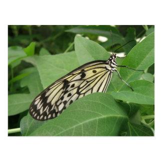 Paper Kite Butterfly Macro Postcard