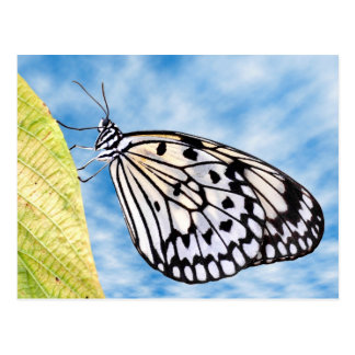 Paper kite butterfly on leaf post card