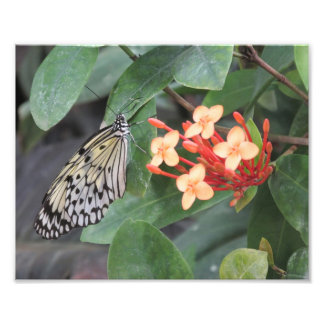 Paper Kite Butterfly Photo Print