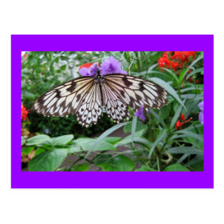 Paper Kite Butterfly Postcard