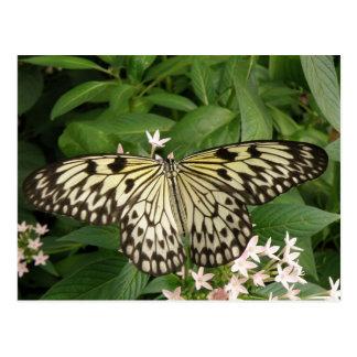 Paper Kite Butterfly Postcard