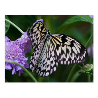 Paper Kite Butterfly Postcards