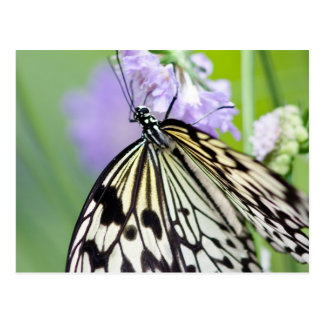 Paper Kite Butterfly Post Card