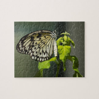 Paper Kite Butterfly Puzzle