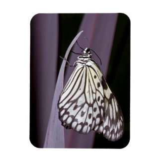 Paper Kite on purple Agave leaf Magnet