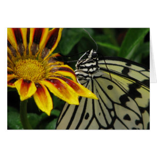 paper kite smiles ~ 2009 butterfly series stationery note card