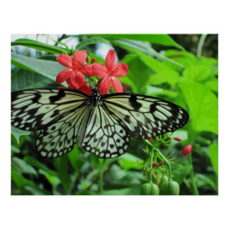 Paper Kite Tropical Butterfly Poster
