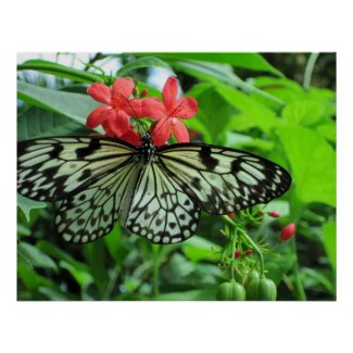 Paper Kite Tropical Butterfly print