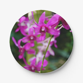 Paper Plates - Cooktown Orchid