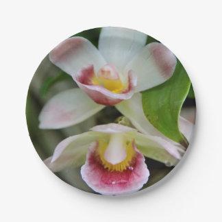 Paper Plates - Fan Shaped Orchid