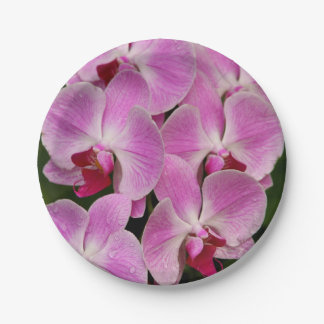 Paper Plates - Orchid