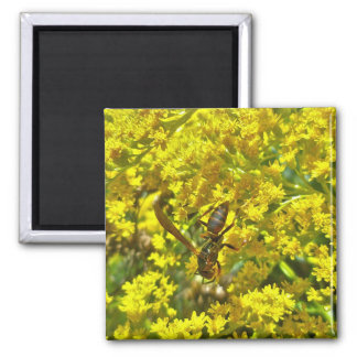 Paper Wasp on Goldenrod Items 2 Inch Square Magnet