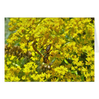 Paper Wasp on Goldenrod Items Card