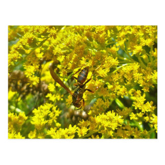 Paper Wasp on Goldenrod Items Postcard